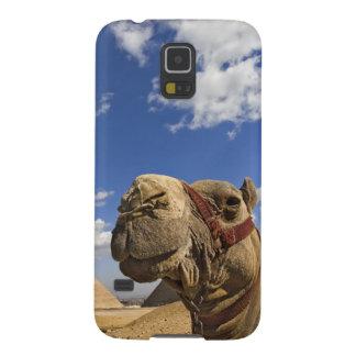 Camelo na frente das pirâmides de Giza, Egipto, Capas Par Galaxy S5