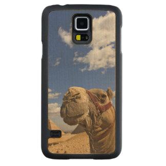 Camelo na frente das pirâmides de Giza, Egipto, Case Slim De Bordo Para Galaxy S5