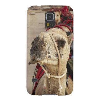 Camelo na praia do cabo, Broome Capinhas Galaxy S5