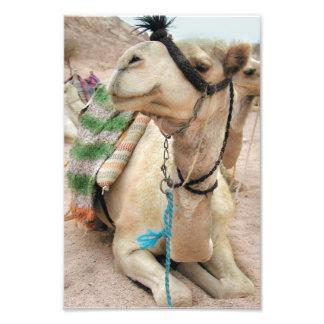 Camelo no poster do deserto fotografias