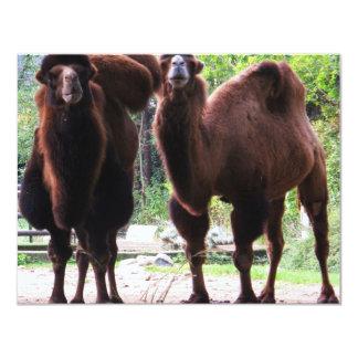 Camelos Convite