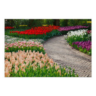 Caminho através do poster colorido do jardim