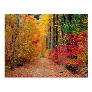 Caminho do outono, cartão