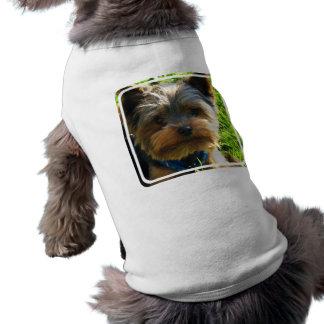 Camisa do animal de estimação do yorkshire terrier camisas para caes