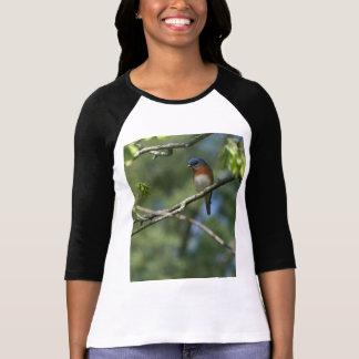 Camisa oriental do Bluebird