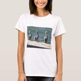 Camiseta 3 pelicanos