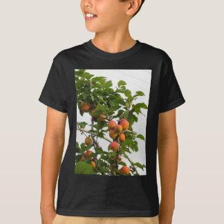 Camiseta Abricós maduros que penduram na árvore. Toscânia,