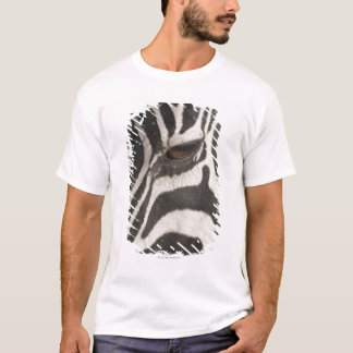 Camiseta África, Tanzânia, área da conservação de