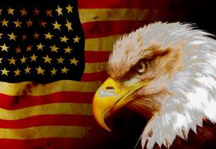Camiseta Águia americana com bandeira b95826cbd59d5