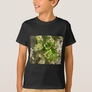 Camiseta Alface fresca que cresce no campo. Toscânia,