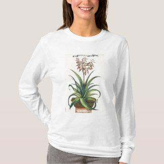 "Camiseta Aloés Vera vulgar, de ""Phytographia Curiosa"", p"