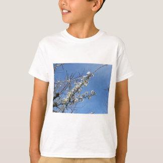 Camiseta Ameixa de florescência contra o céu. Toscânia,