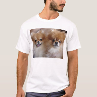 Camiseta Amigos de Pomeranian