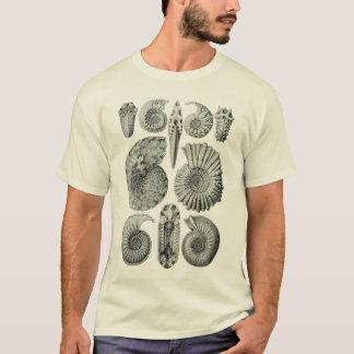 Camiseta Amonites