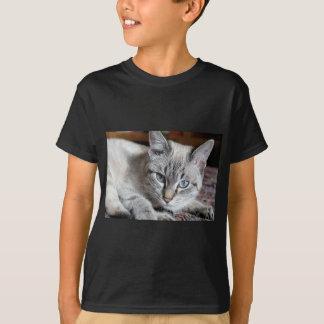 Camiseta Animal de estimação da cavala de Mieze do gatinho