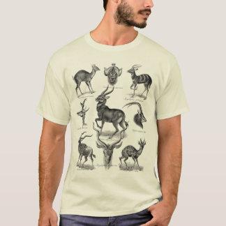 Camiseta Antílopes