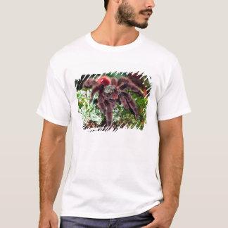 Camiseta Aranha da árvore de Martinica, Avicularia