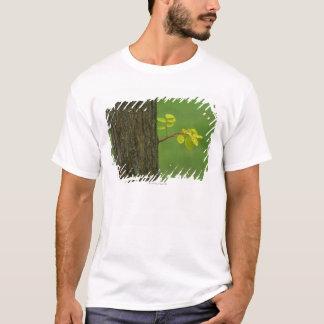 Camiseta Árvore de locustídeo pretos que cresce um ramo