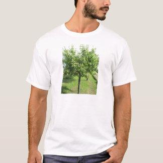 Camiseta Árvore de pera com folhas do verde e frutas