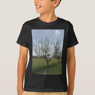 Camiseta Árvore de pera de florescência no jardim Toscânia,