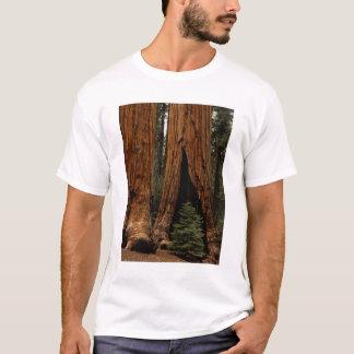 Camiseta Árvores da sequóia vermelha, parque nacional de