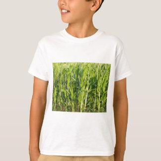 Camiseta As plantas de milho verde estão crescendo no verão