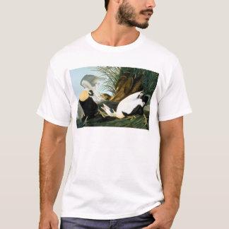 Camiseta Audubon: Pato de êider