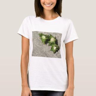 Camiseta Avelã verdes frescas no assoalho