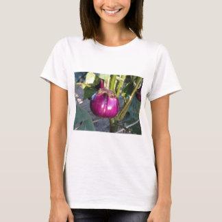Camiseta Beringela redonda roxa que pendura na árvore