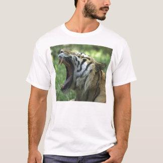 Camiseta bocejo do tigre