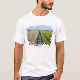 Camiseta campos no meio do arroz do canal de irrigação