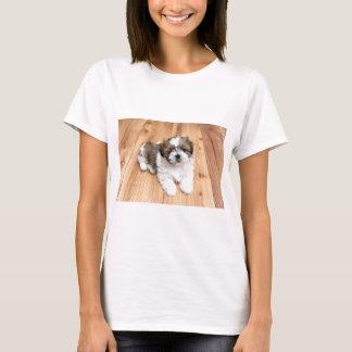 Camiseta Cão novo de Chu do qui que encontra-se no assoalho