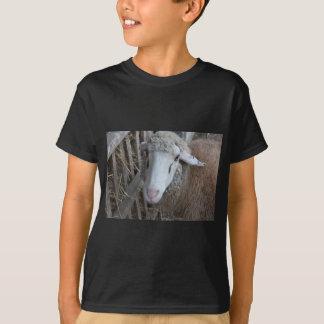 Camiseta Carneiros com feno