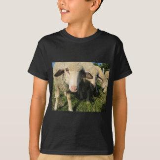 Camiseta Carneiros curiosos