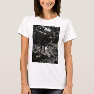 Camiseta Carneiros de Bighorn da montanha rochosa, ovelha