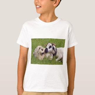 Camiseta Carneiros de Thones e de Marthod