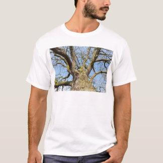 Camiseta Carvalho da vista inferior sem as folhas no
