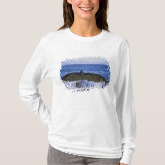 Camiseta Cauda do Humpback