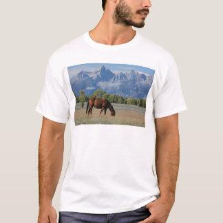 Camiseta Cavalo, rancho de Wyoming