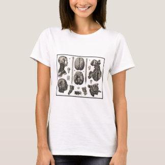 Camiseta Cérebro anatômico e mais