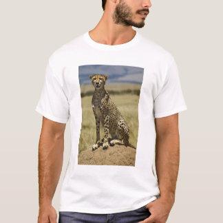 Camiseta Chita que descansa, jubatus do Acinonyx, Masai
