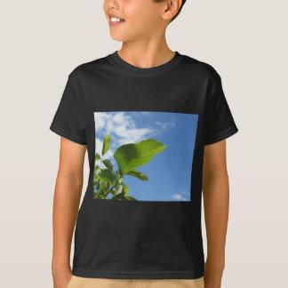Camiseta Close up da folha da noz iluminado pela luz solar