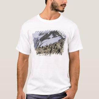 Camiseta Colônia de pinguins de Chinstrap
