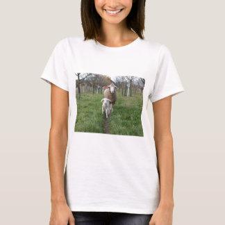 Camiseta Cordeiro e carneiros