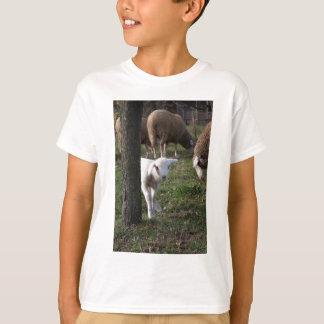 Camiseta Cordeiro tímido