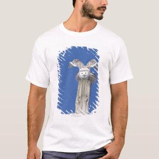 Camiseta Coruja nevado sobre um pólo, preparando-se para