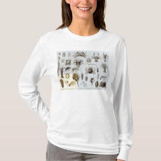 Camiseta Crustáceos e aracnídeos