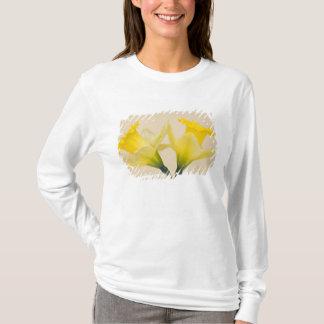 Camiseta Daffodils amarelos