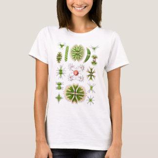 Camiseta Desmids