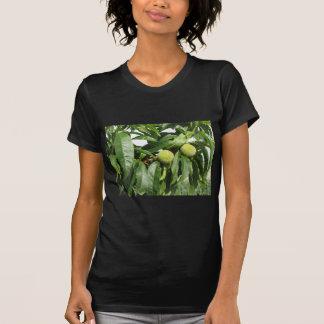 Camiseta Dois pêssegos verdes unripe que penduram em uma